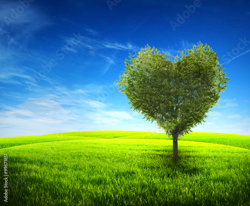 Foto op Aluminium Bomen Tree