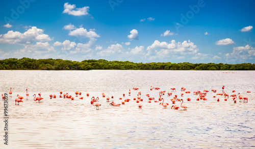 Cadres-photo bureau Flamingo Flamingos at a lagoon Rio Lagartos, Yucatan, Mexico
