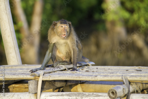 Photo  Monkey.