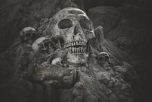Still Life Of Skull