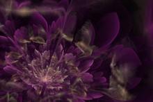 Violet Fractal Flower On Dark Background