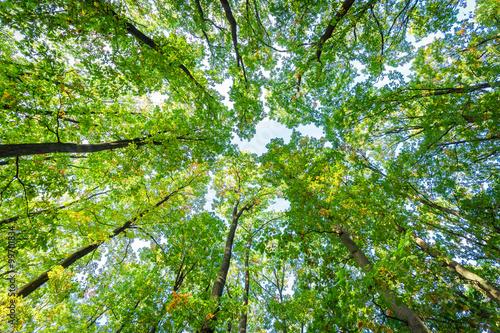 Fotobehang Aan het plafond Look up in the autumn forest