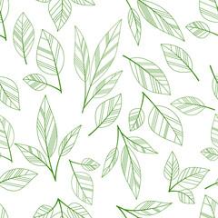fototapeta liść zielony