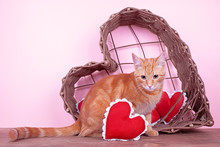 Valentine Pet Cat With Hearts For Valentine's Day