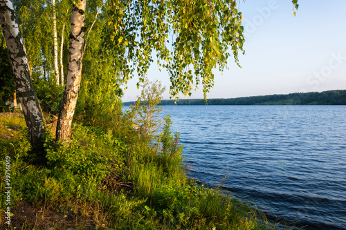 Foto op Canvas Bomen Shore of the Volga river in the morning sun.