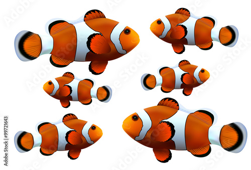 Fotografie, Obraz  Clown fish on white background