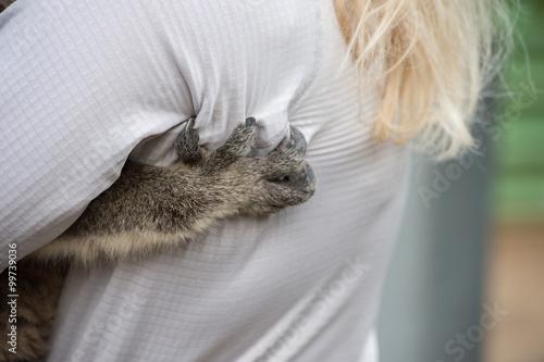 Garden Poster Koala koala arm detail on woman