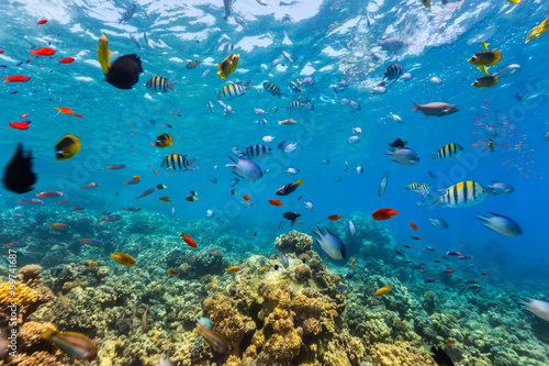 Poster Coral reefs Coral reef and tropical fish in Red Sea