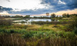 canvas print picture - Northern Wetlands Habitat. Protected wetland habitat along the coast of Lake Superior. Tahquamenon Falls State Park. Paradise, Michigan.