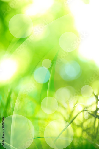Green abstract nature background with sunlight - 99790036