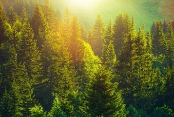 FototapetaSummer in Alpine Forest
