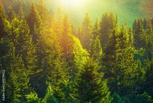 Summer in Alpine Forest