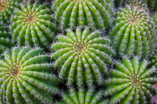 In de dag Cactus Cactus Plant