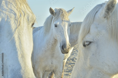 Photo  white horse portrait on natural background. Close up.