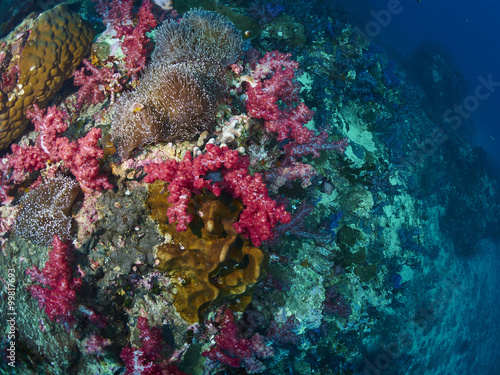 Photo Stands Coral reefs soft coral