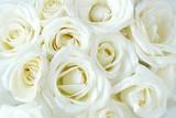 Soft full blown white roses