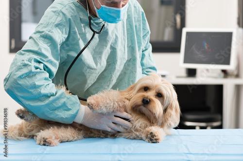 Fotografía  Vétérinaire et chien échographie