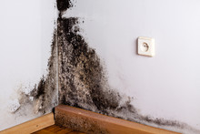 Black Mold In The Corner Of Ro...