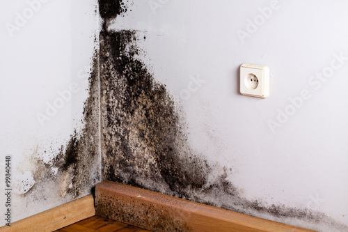Obraz na plátne Black mold in the corner of room wall