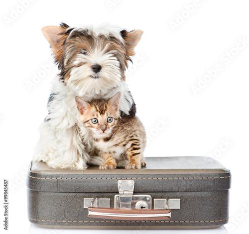 pies-na-walizce
