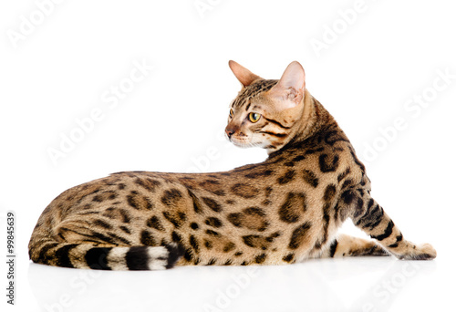 adult Bengal cat looks back. isolated on white background Wallpaper Mural
