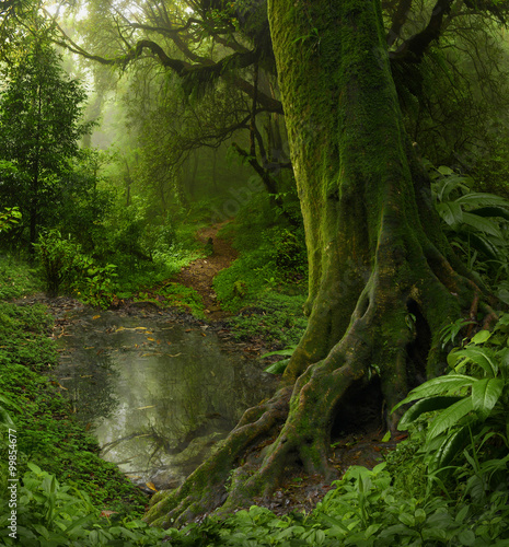 La pose en embrasure Jungle Selva de Nepal