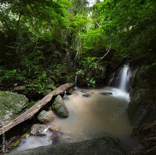 Fototapety, obrazy: Wild forest background
