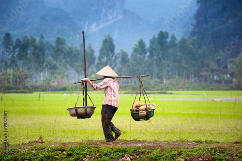 obraz dibond Vietnamese farmer on rice paddy field in Ninh Binh, Tam Coc. Organic farming in Asia