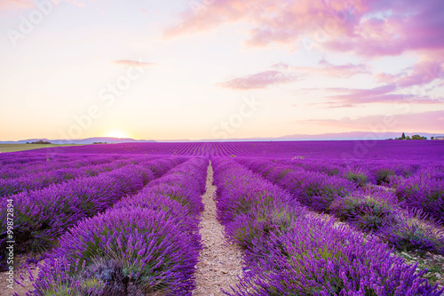 Poster Violet Lavender fields near Valensole in Provence, France on sunset