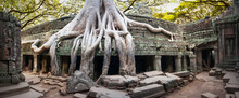 Ancient Temples Of Angkor Wat Site In Cambodia Under Big Tree Roots