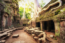 Angkor Wat Cambodia. Ta Prom Khmer Ancient Buddhist Temple In Jungle Forest. Famous Landmark