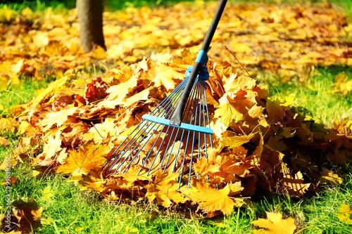 Fotografia Raking fall leaves with rake
