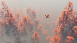 Single engine airplane over autumn pines in the mist. - 99884878
