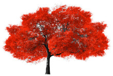 Big Red Tree On White Background