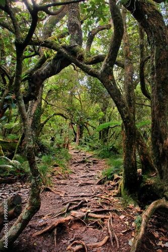 Papiers peints Noir Forêt tropicale de la Réunion.