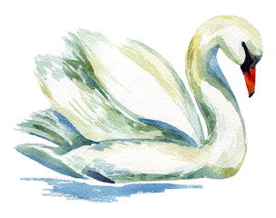 Obraz na Szkle Watercolor swan.