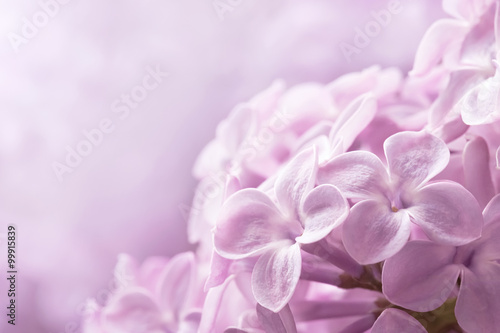 fototapeta na lodówkę Lilac flowers close-up