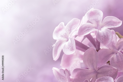 Photo sur Toile Lilac Lilac flowers close-up