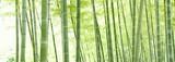 竹林のパノラマ