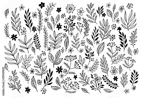 Fotografía  Set of sketches and line doodles  hand drawn design floral elements