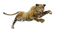 Jaguar Leaping, Wild Animal Is...