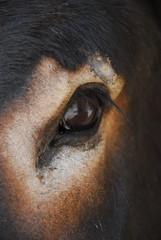 een oog van een ezel close up