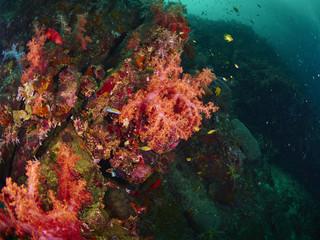 Fototapeta na wymiar coral reef and reef fish