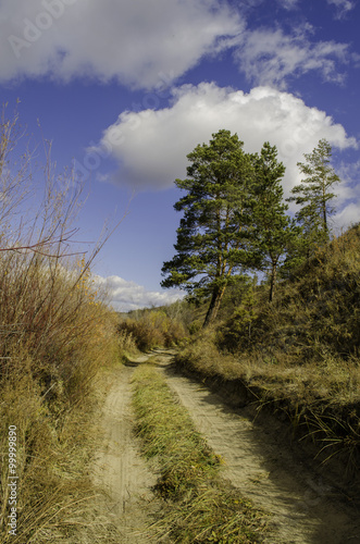 Obraz Road in a forest  - fototapety do salonu