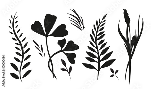 Set with plants, herbs and grasses painted ink Canvas Print