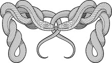 Two Twisted Snakes. Decorative Element.