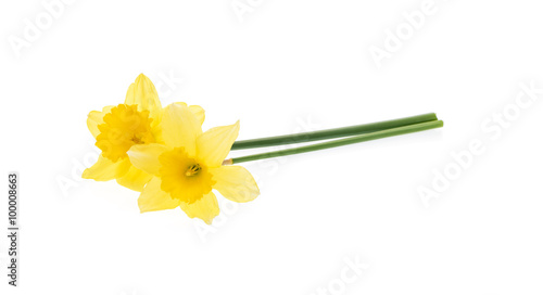 Tuinposter Narcis Yellow daffodils isolated on white.