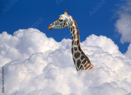 Spoed Foto op Canvas Giraffe giraffe above clouds