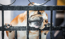 Funny English Bulldog Behind A...