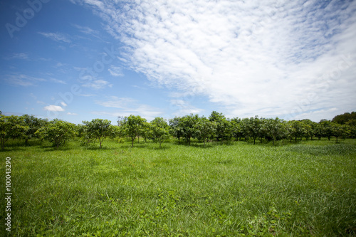 Photo  Green field ,trees and blue sky